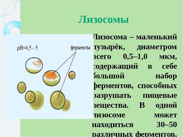Лизосомы Лизосома – маленький пузырёк, диаметром всего 0,5–1,0 мкм, содержащи...