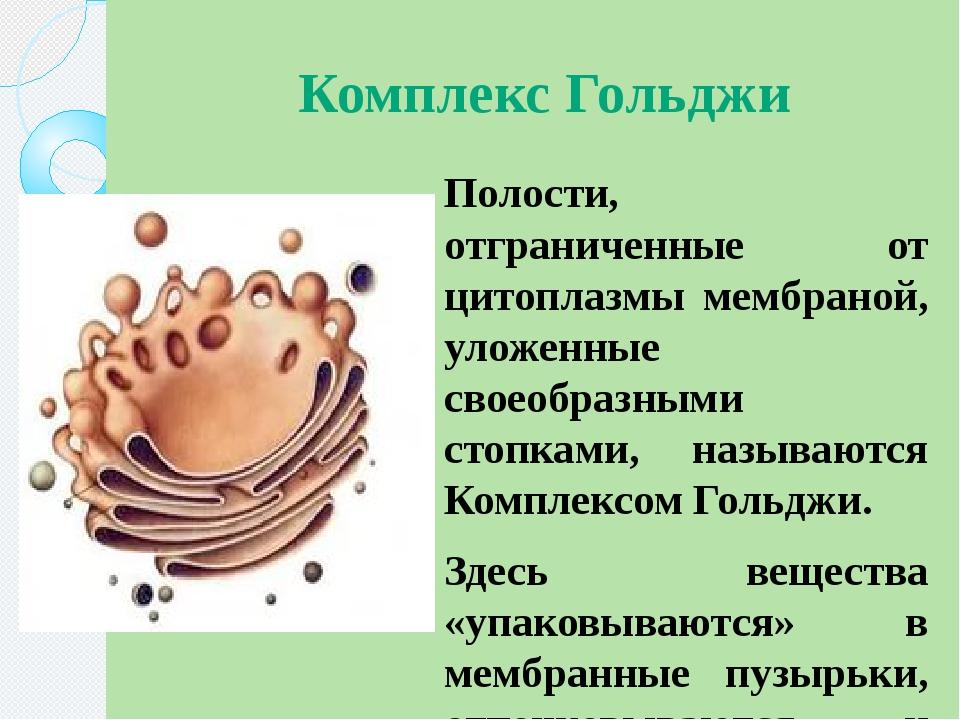 Комплекс Гольджи Полости, отграниченные от цитоплазмы мембраной, уложенные св...