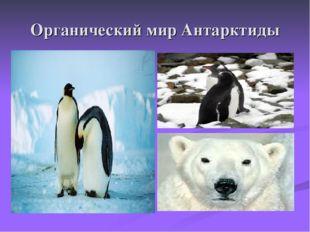 Органический мир Антарктиды