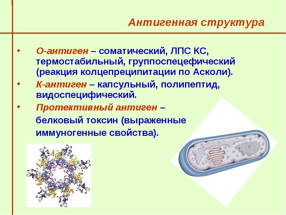 Антигенная структура  О-антиген – соматический, ЛПС КС, термостабильный, гру...