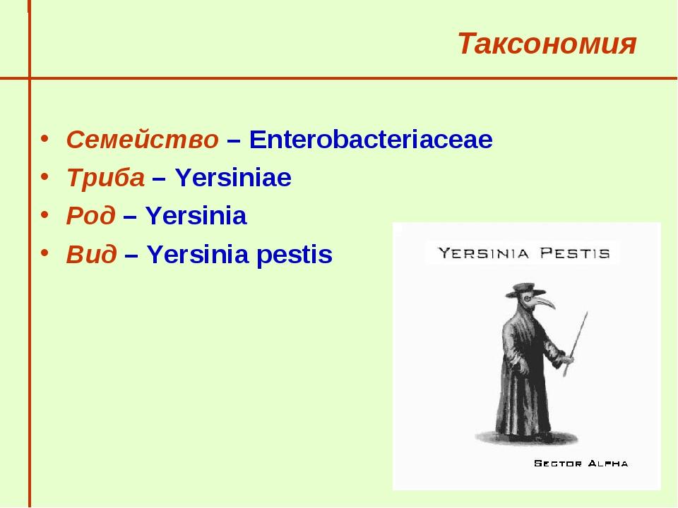 Таксономия Семейство – Enterobacteriaceae Триба – Yersiniae Род – Yersinia...