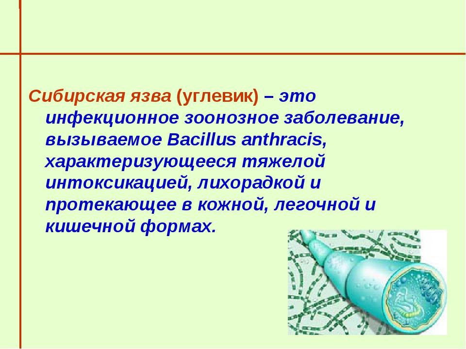 Сибирская язва (углевик) – это инфекционное зоонозное заболевание, вызываемое...