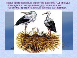 Гнезда аистообразные строят по-разному. Одни виды помещают их на деревьях, др