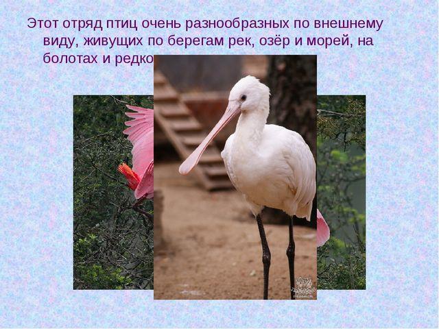 Этот отряд птиц очень разнообразных по внешнему виду, живущих по берегам рек,...