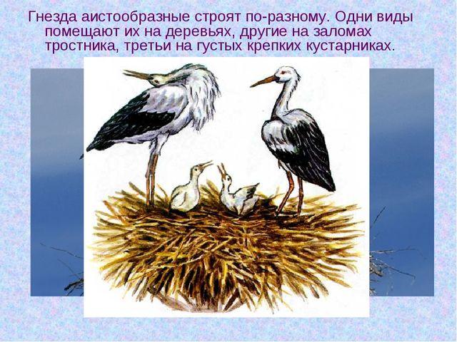 Гнезда аистообразные строят по-разному. Одни виды помещают их на деревьях, др...