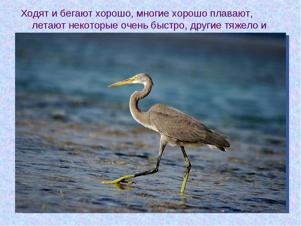 Ходят и бегают хорошо, многие хорошо плавают, летают некоторые очень быстро,...