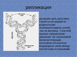 репликация дочерняя цепь (реплика) строится на каждой из родительских полинук