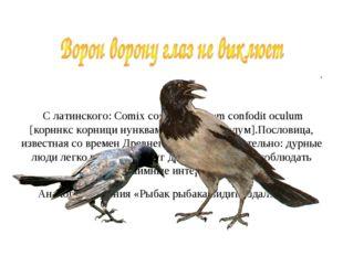 С латинского: Comix cornici nunquam confodit oculum [корннкс корници нунквам