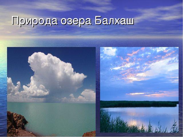 Природа озера Балхаш