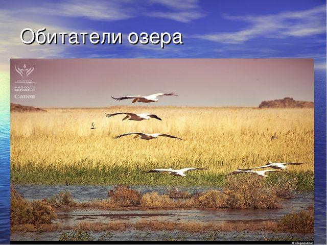Обитатели озера
