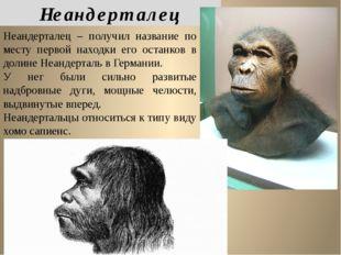 Неандерталец – получил название по месту первой находки его останков в долине