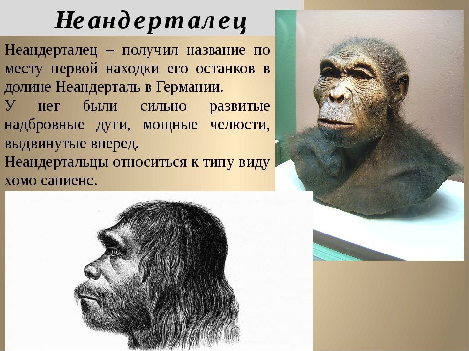 Неандерталец – получил название по месту первой находки его останков в долине...
