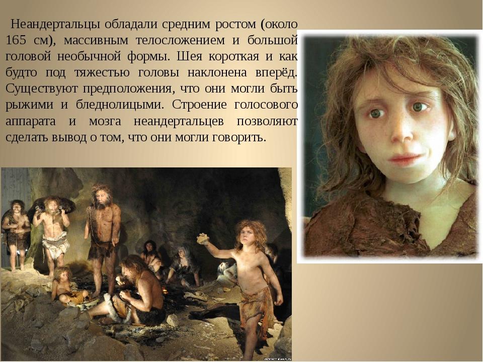 Неандертальцы обладали средним ростом (около 165 см), массивным телосложение...