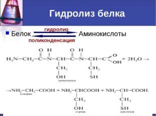 Гидролиз белка Белок Аминокислоты гидролиз поликонденсация