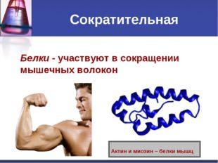 Сократительная Белки - участвуют в сокращении мышечных волокон Актин и миозин