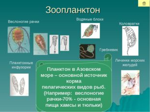 Зоопланктон Веслоногие рачки Водяные блохи Коловратки Планктонные инфузории Л
