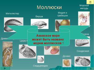 Моллюски Митилястер Дрейссена Морской желудь Синдесмия Венерки Древоточец Цер