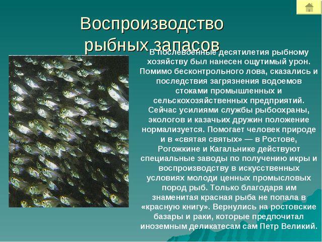 Воспроизводство рыбных запасов В послевоенные десятилетия рыбному хозяйству б...