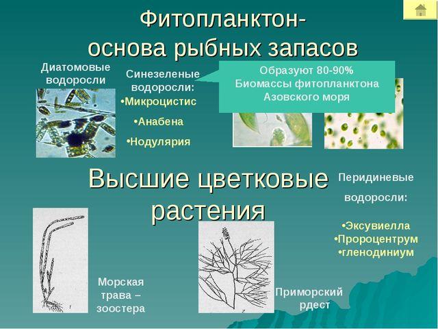 Фитопланктон- основа рыбных запасов Диатомовые водоросли Высшие цветковые рас...