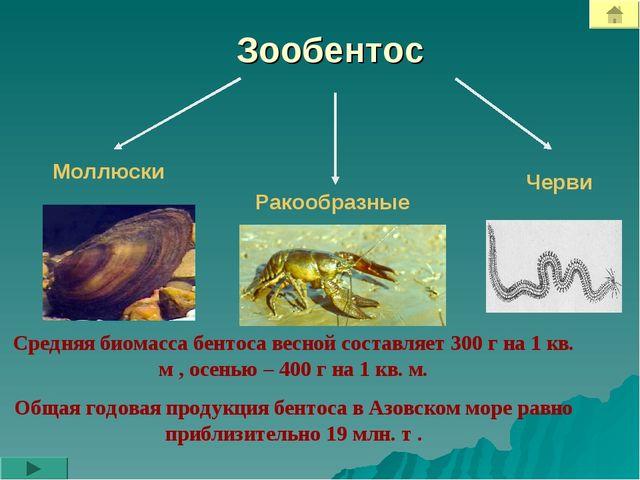 Зообентос Моллюски Ракообразные Черви Средняя биомасса бентоса весной составл...