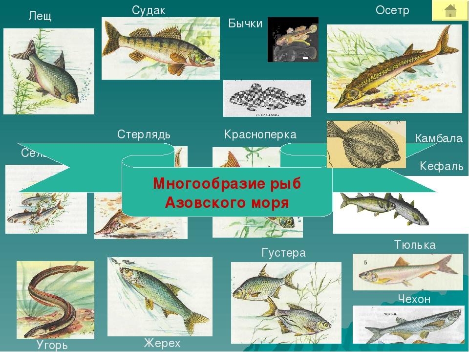 рыбы азовского моря названия и фото фотосессия предполагает