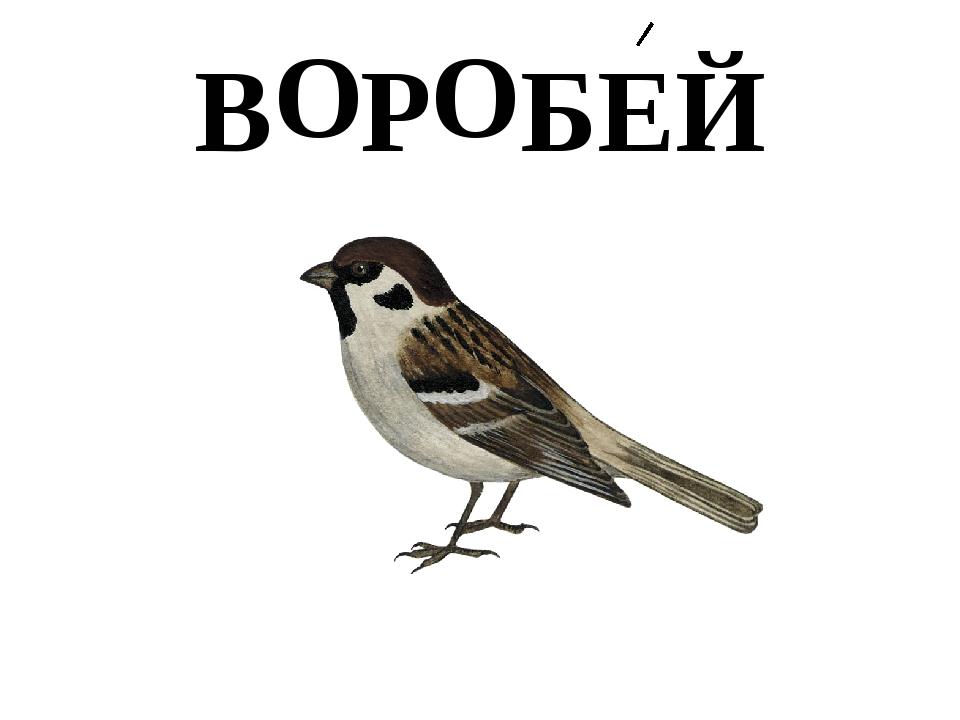 В Р БЕЙ О О