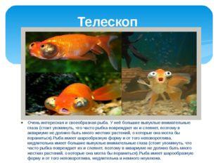 Телескоп Очень интересная и своеобразная рыба. У неё большие выпуклые внимате