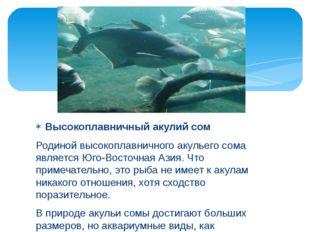 Высокоплавничный акулий сом Родиной высокоплавничного акульего сома является