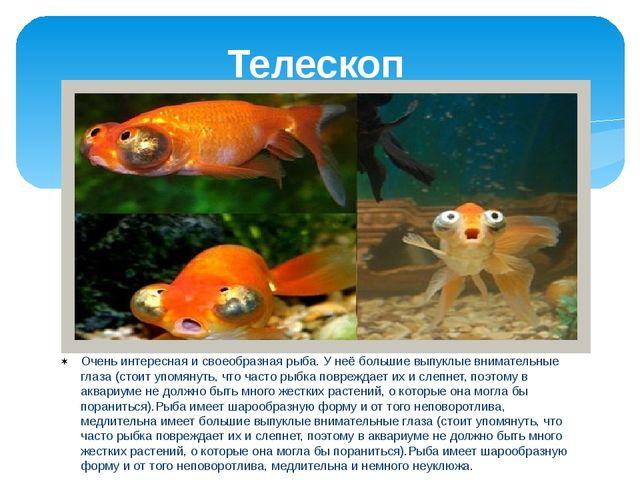 Телескоп Очень интересная и своеобразная рыба. У неё большие выпуклые внимате...
