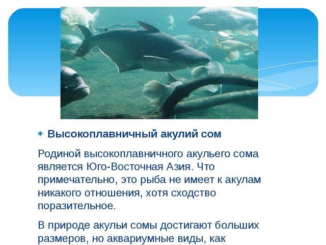 Высокоплавничный акулий сом Родиной высокоплавничного акульего сома является...