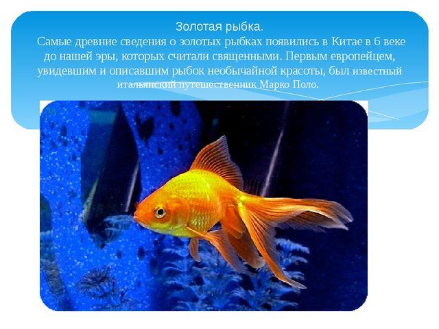 Золотая рыбка. Самые древние сведения о золотых рыбках появились в Китае в 6...