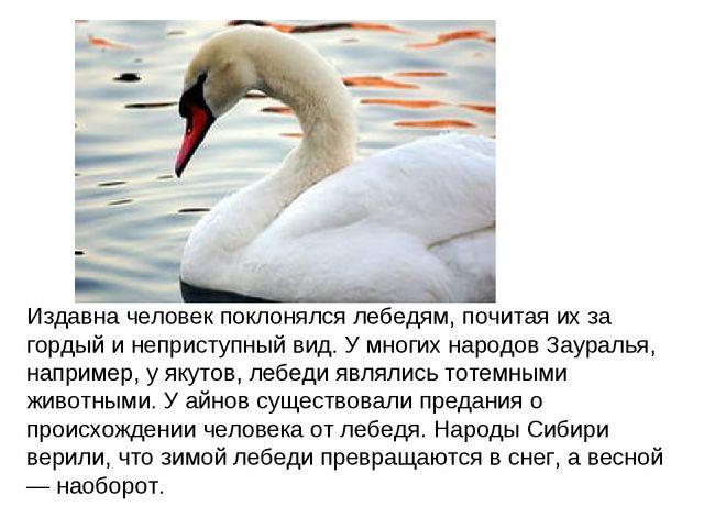 Издавна человек поклонялся лебедям, почитая их за гордый и неприступный вид....