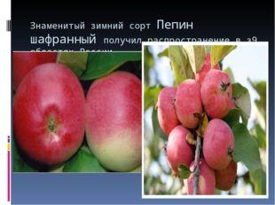 Знаменитый зимний сорт Пепин шафранный получил распространение в з9 областях