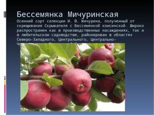 Бессемянка Мичуринская Осенний сорт селекции И. В. Мичурина, полученный от ск