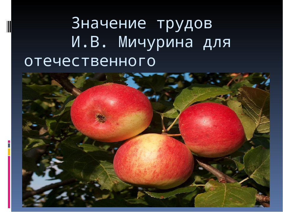 Значение трудов И.В. Мичурина для отечественного садоводства.
