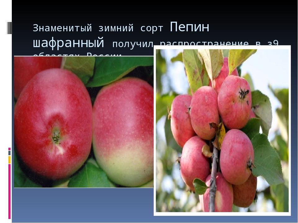 Знаменитый зимний сорт Пепин шафранный получил распространение в з9 областях...