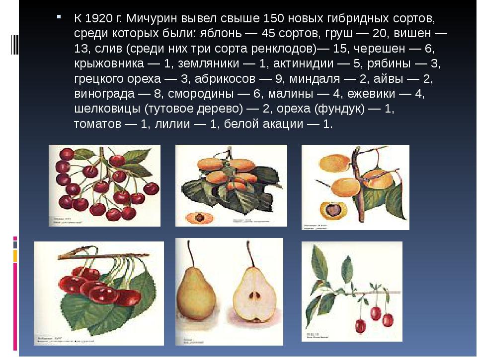 К 1920г. Мичурин вывел свыше 150 новых гибридных сортов, среди которых были...
