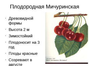Плодородная Мичуринская Древовидной формы Высота 2 м Зимостойкий Плодоносит н