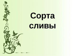 Сорта сливы
