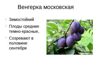 Венгерка московская Зимостойкий Плоды средние темно-красные, Созревают в поло