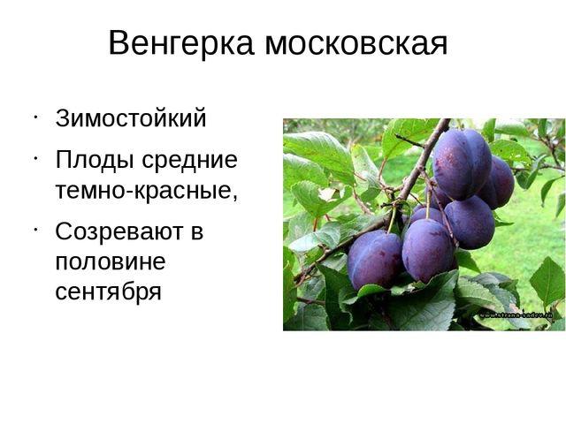Венгерка московская Зимостойкий Плоды средние темно-красные, Созревают в поло...