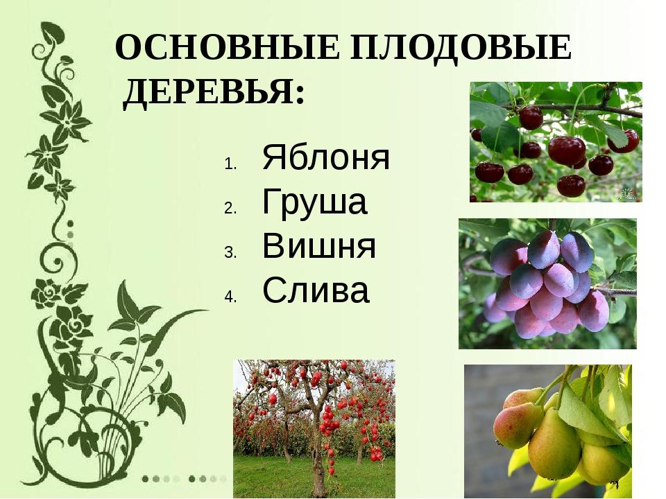 ОСНОВНЫЕ ПЛОДОВЫЕ ДЕРЕВЬЯ: Яблоня Груша Вишня Слива Яблоня Груша Вишня Слива