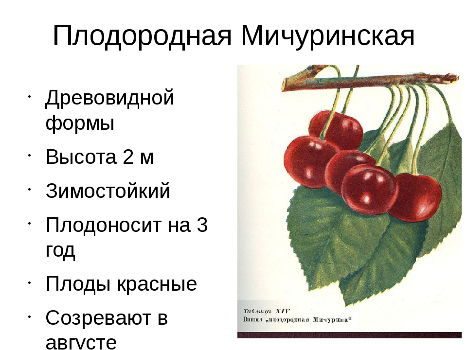 Плодородная Мичуринская Древовидной формы Высота 2 м Зимостойкий Плодоносит н...
