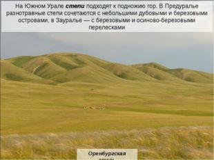 сурок суслик пищуха степной орел коршун пустельга жаворонок степной хорь лиси