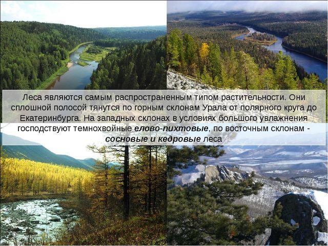 Настоящие хвойно-широколиственные и широколиственные леса распространены на з...