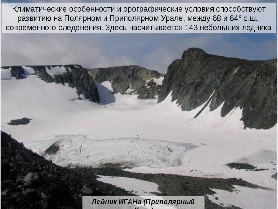 На крайнем севере от предгорных равнин до горных вершин распространены тундры...