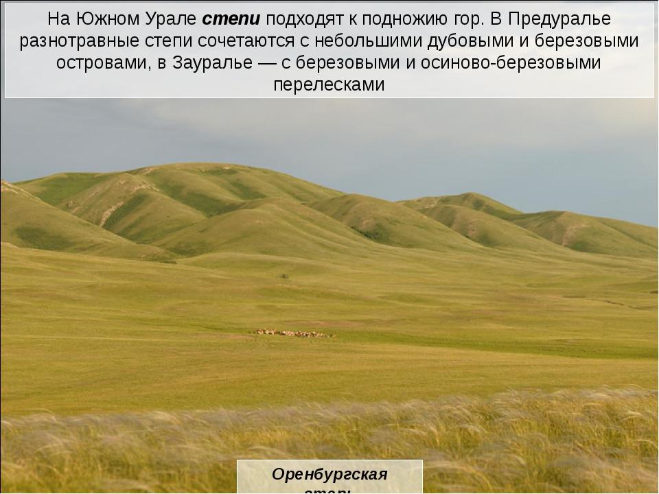 сурок суслик пищуха степной орел коршун пустельга жаворонок степной хорь лиси...