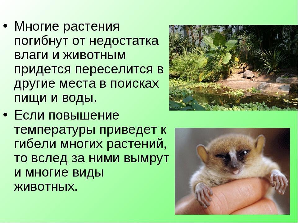Многие растения погибнут от недостатка влаги и животным придется переселится...