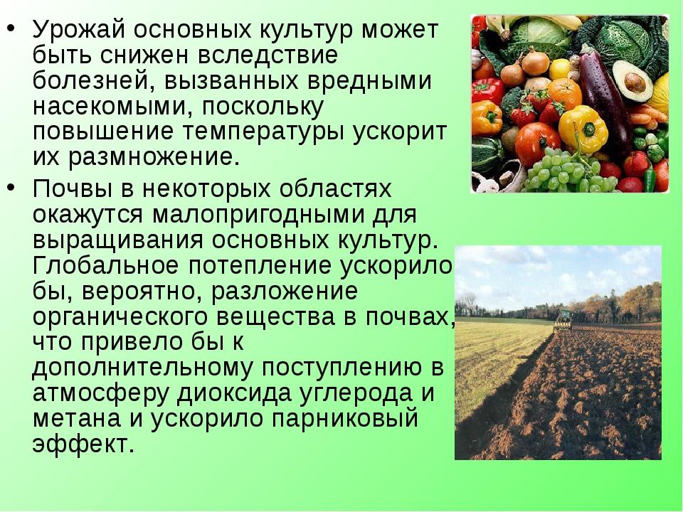 Урожай основных культур может быть снижен вследствие болезней, вызванных вред...