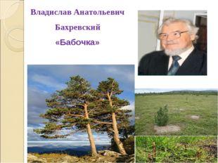 Владислав Анатольевич Бахревский «Бабочка»